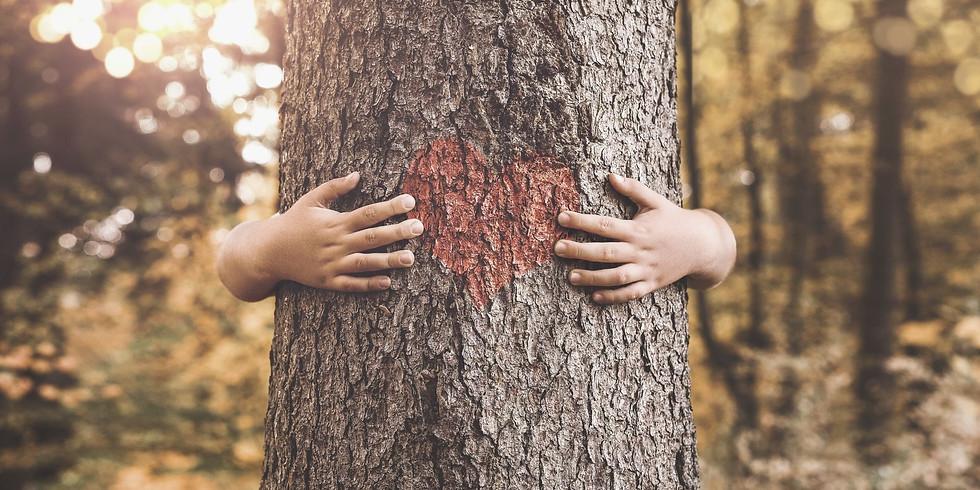 La Sylvothérapie: bienfaits du milieu forestier sur la santé humaine