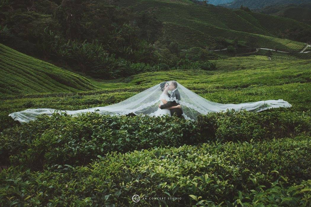 59Natural Cameron Highland Pre-weddi