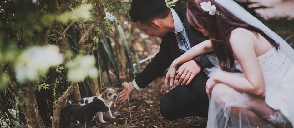 Cameron Highland Pre-wedding Photography  Celebrating Haw & Wei