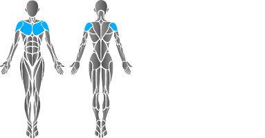 muscular-pec-deck-2.jpg