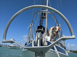 Our Mantus Anchor in the Bow Roller. Obligatory Griffin photobomb.