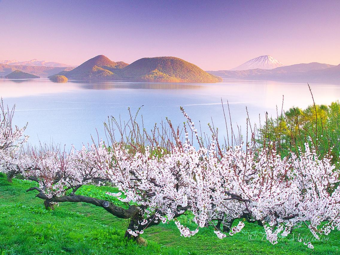 Lake Toya and Plum Trees