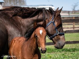 Magnolia & foal born -18