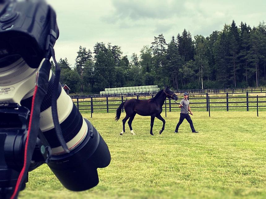 Auktionsfilm filmning av häst auktion