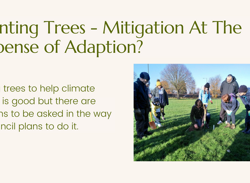 Planting Trees To Help Climate Change Is Good But There Are Questions To Be Asked