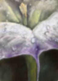 Datura Dew pastel painting