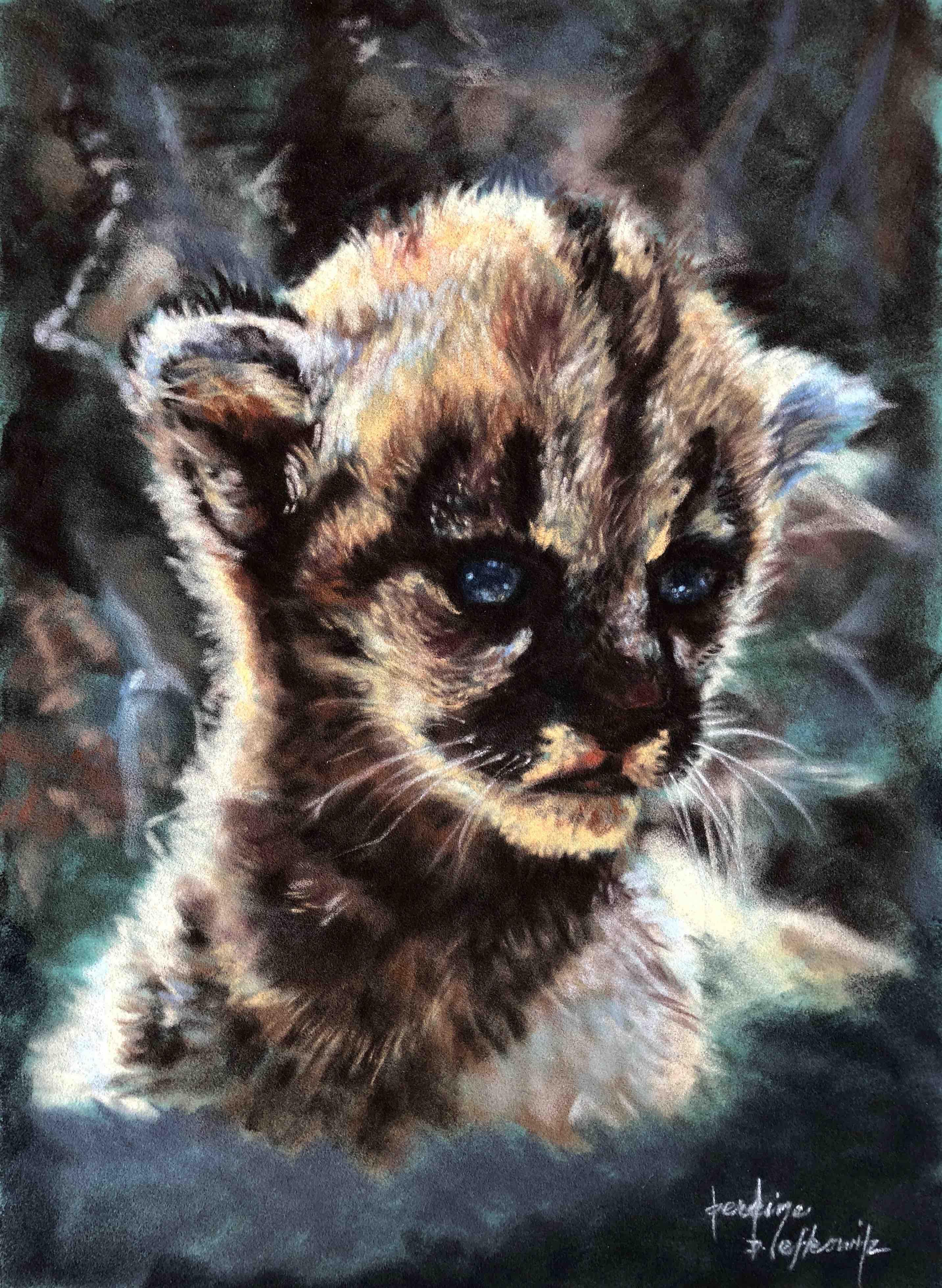 lion cougar cub