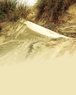 Pea Island Dune