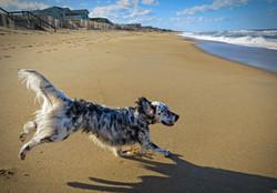 Bird Dogs Can Fly