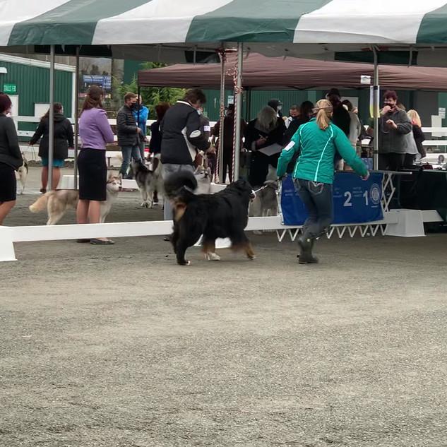Whidbey Island Dog Show Nov 2020