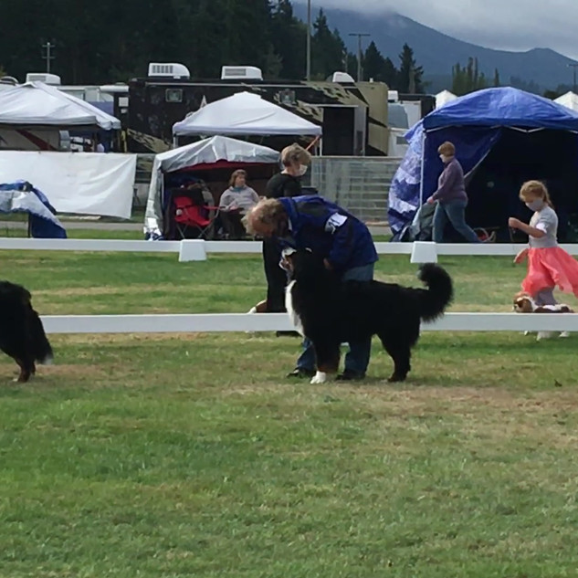 Fridolin Open Dogs 2nd Place Enumclaw Sept 26, 2020