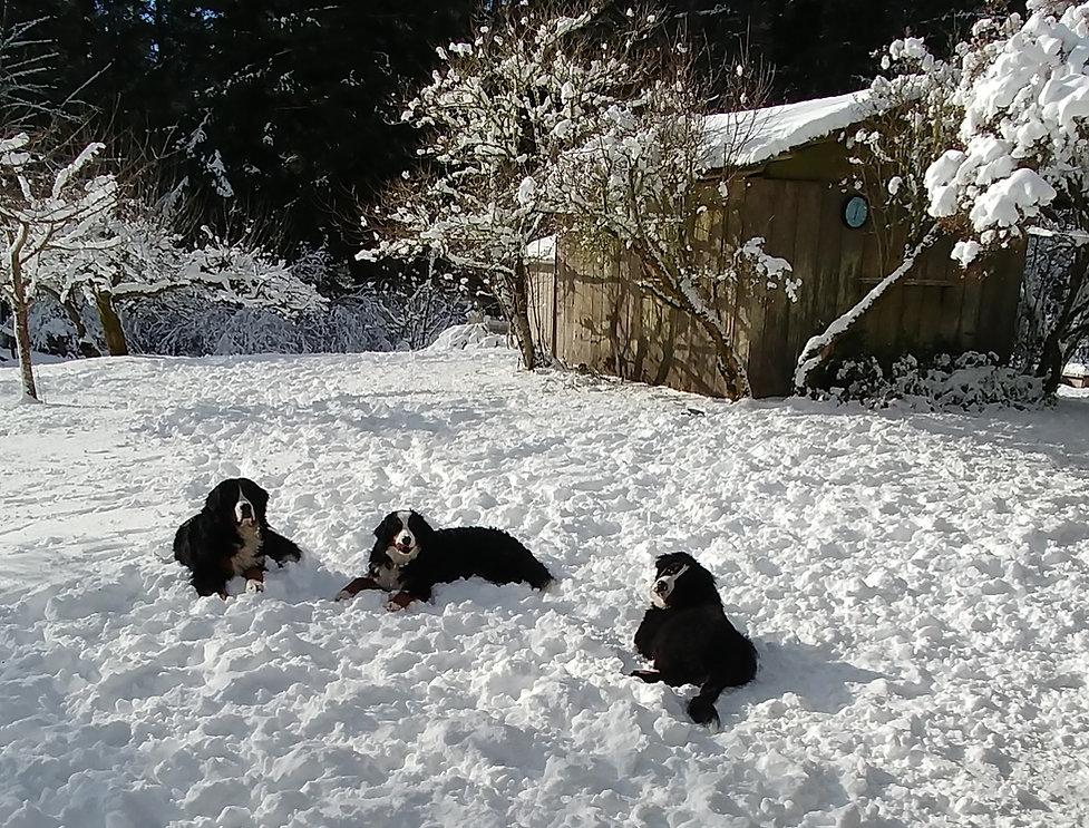 NW Snow Feb 2019 26.jpg