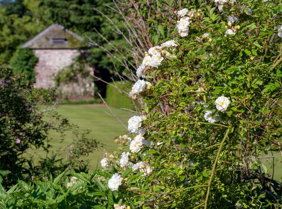 Newtonmill House Garden-71.jpg