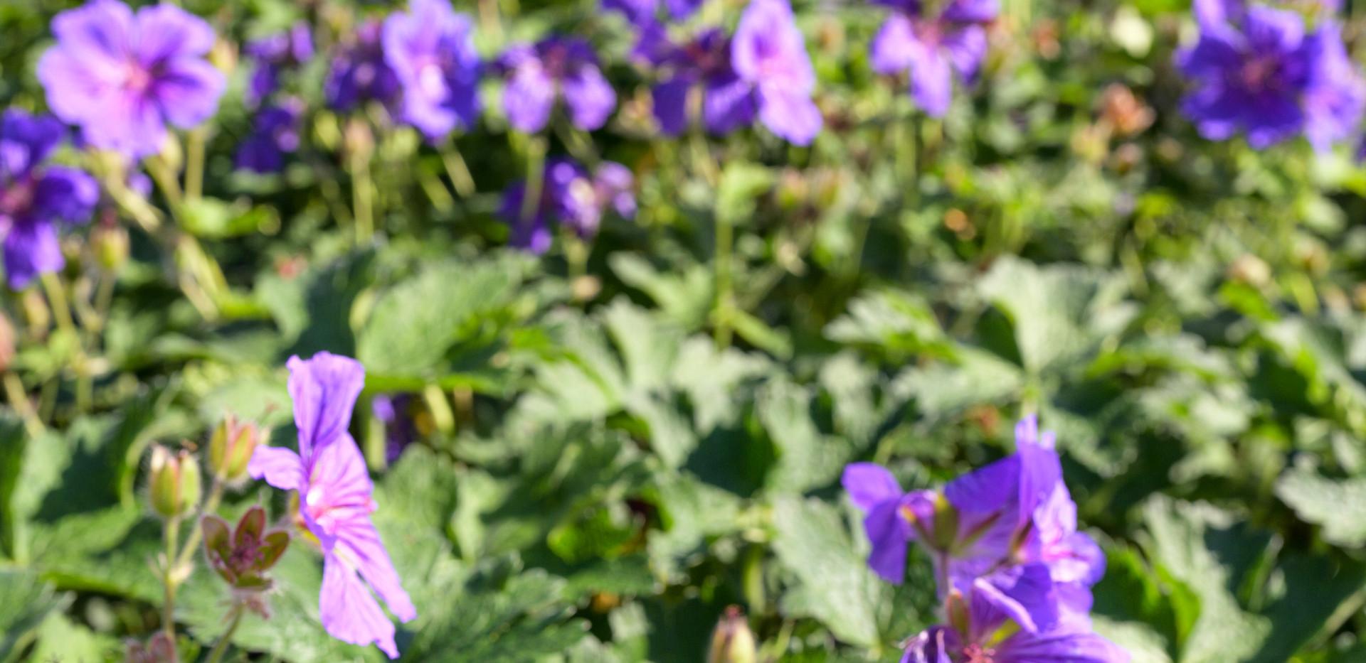 Newtonmill House Garden-24.jpg