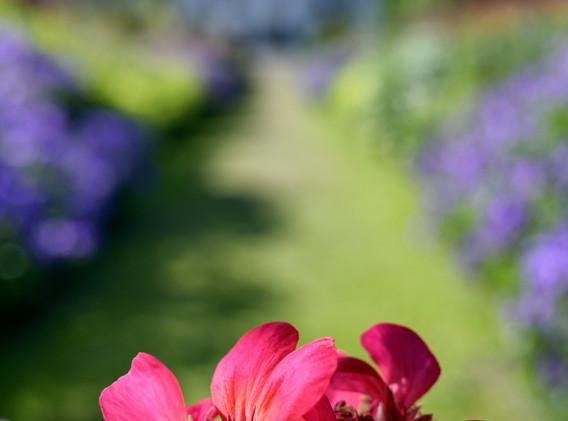 Newtonmill House Garden-72.jpg