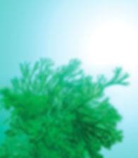ecologieMarine.jpg