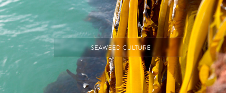 seaweed-culture-engaged-cosmetics.jpg
