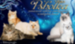 Psholka-кошки