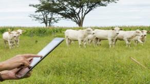 Magazine Luiza vai investir US$ 40 milhões em startup do agro