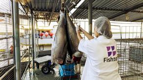 Fishtag recebe R$ 1,8 milhão de investidores-anjo