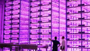 Pink Farms recebe aporte de R$2 milhões da SP Ventures e Capital Lab