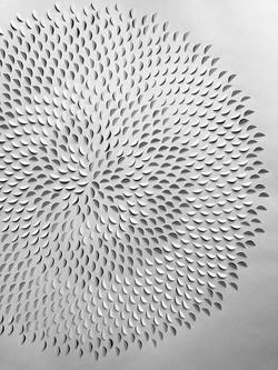 a fibonacci study