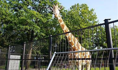 Kaliningradskiy-zoopark_edited.jpg