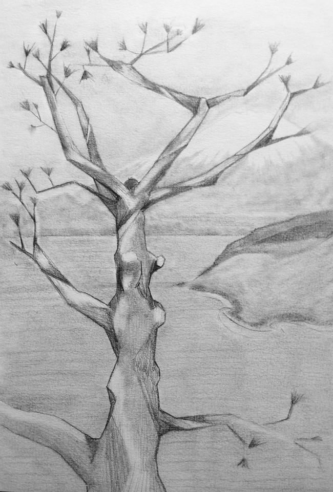 Pine Tree at Lake Yamanaka