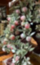 website photos 17.jpg