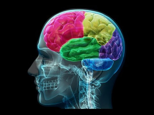 Imagem brain physiology website.jpg