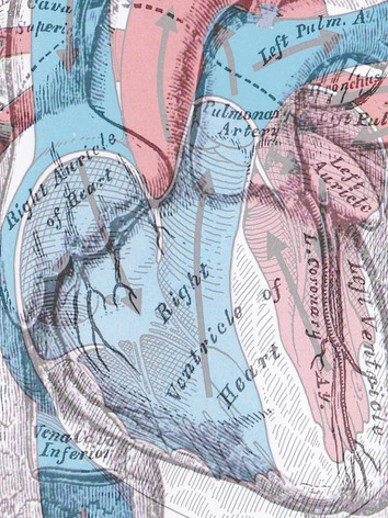heart anatomy with circulation atop.jpg