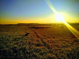 Sunset flock.jpg