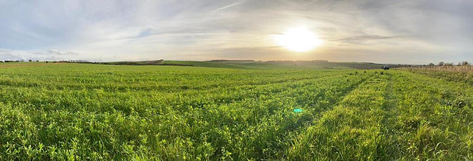 oats and clover panoramic.jpg