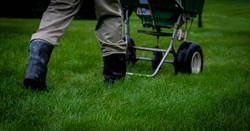 lawn-fertilization-1