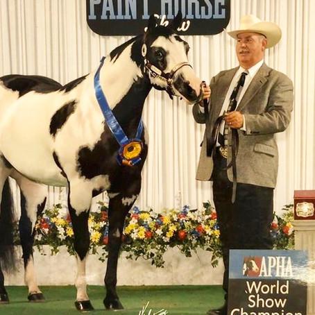 1º Leilão Winning Horses um divisor de águas para a raça Paint no Brasil