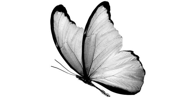 menedżer podziwia skrzydła motyla