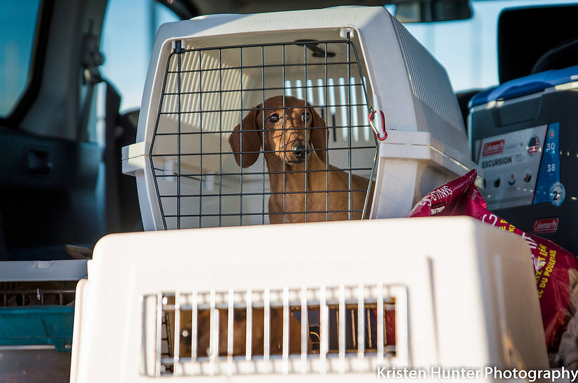 Arrival of resuce dogs
