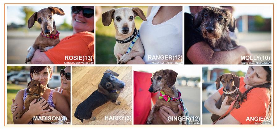Rescue dogs Alumni