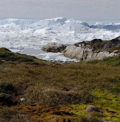 Icefjord Chelsea_edited.jpg