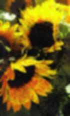 Sunflower Mandalas.jpg