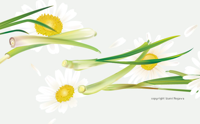 10_tetley_Camomile_Lemongrass_z