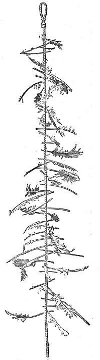 witch's ladder