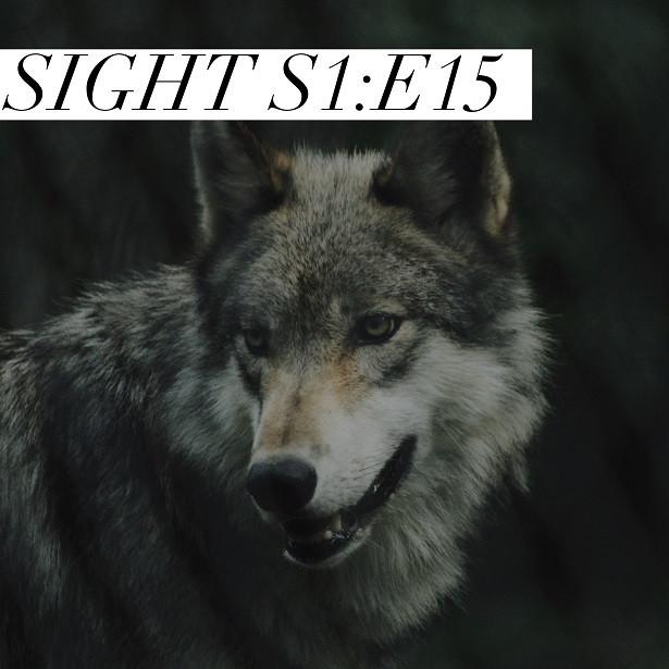 Sight - S1:E15 - Wolf