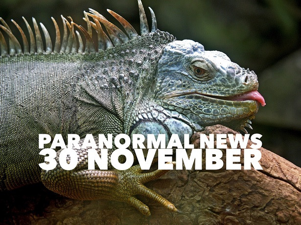 paranormal news of the week - lizard sticking his tongue out