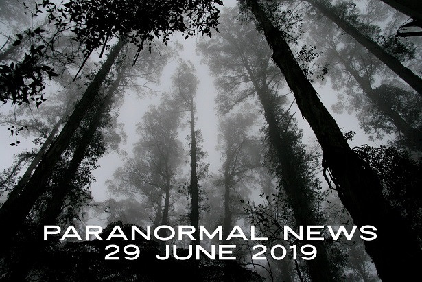 spooky trees and fog - paranormal news June 2019