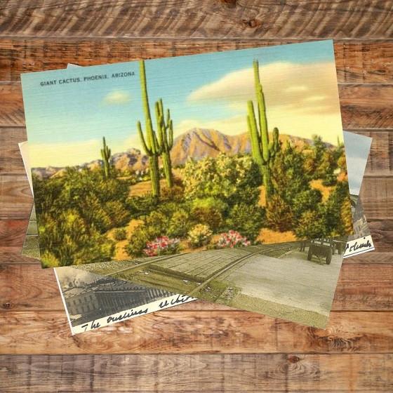 Phoenix cacti - postcard