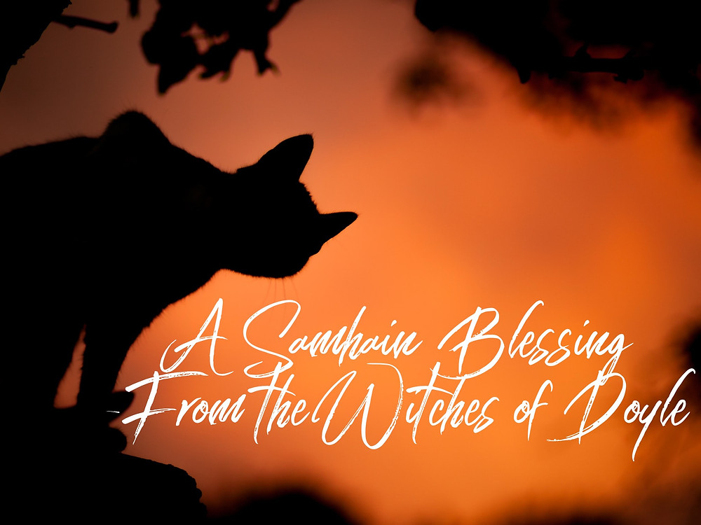Black cat silhouetted against a sunset - A samhain blessing from The Witches of Doyle
