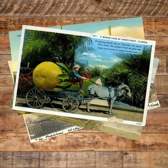 Florida postcard - giant grapefruit in donkey cart. From the Florida Memory Project hosted at the State Archive of Florida.