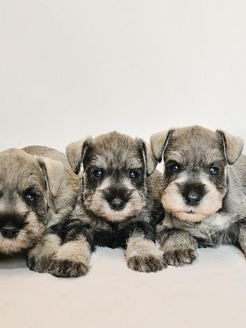 alice puppies4week.jpg