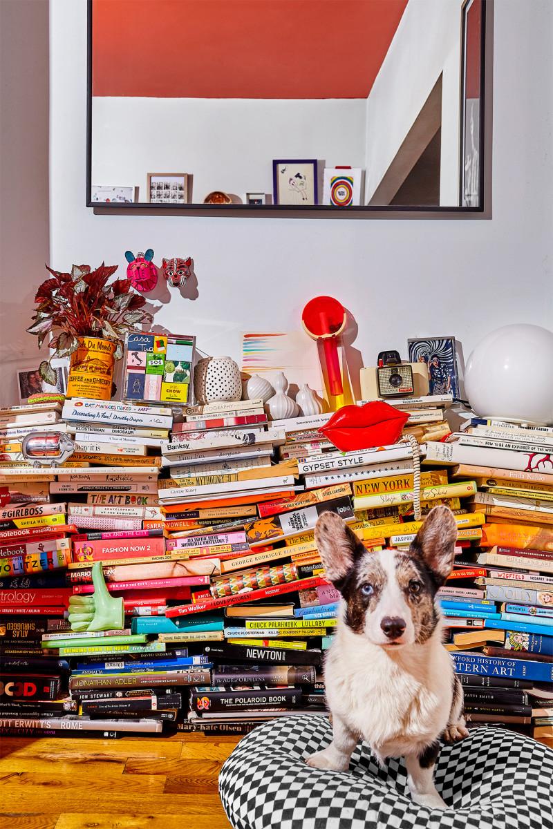 Pilas de libros y objetos varios perro en almohadon